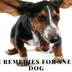 Dog sneezing and runny nose: Home remedies for sneezing dog
