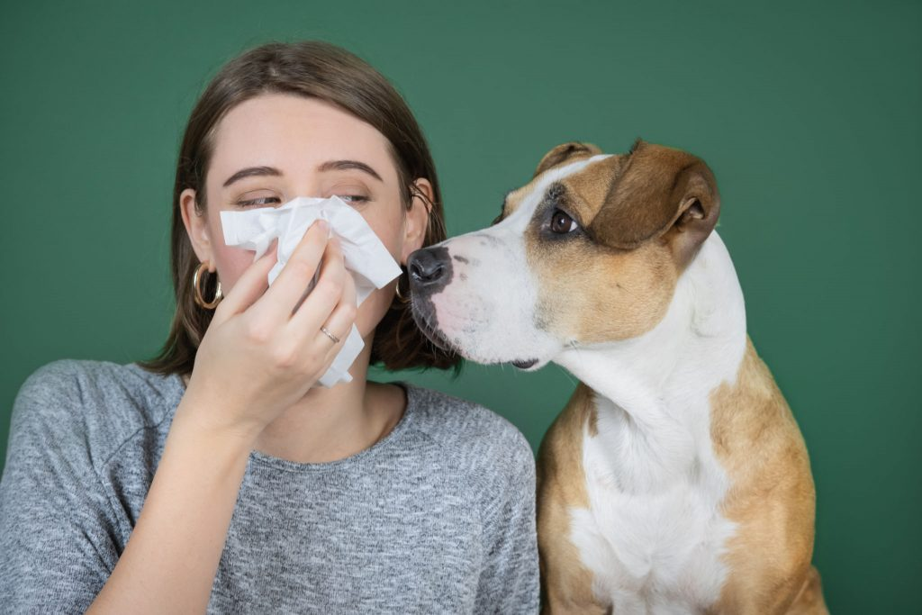 Dog Sneezing Causes and their prevention: