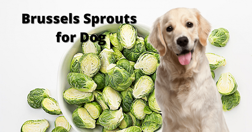 Brussel sprouts for dog