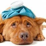 Dog Kidney Failure When to Euthanize
