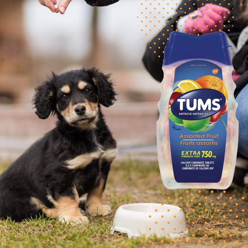 Can Dogs Eat TUMS?