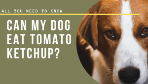 Can My Dog Eat Tomato Ketchup?