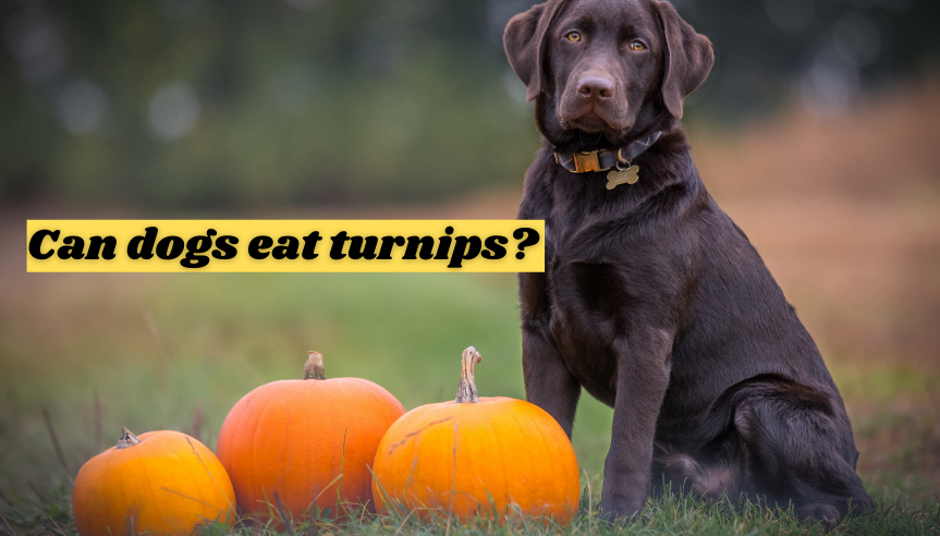 Can dogs eat turnips