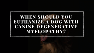 when should you euthanize a dog with Canine degenerative myelopathy?