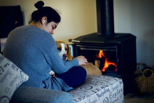 colors beagles see between Humans and Beagle's Vision