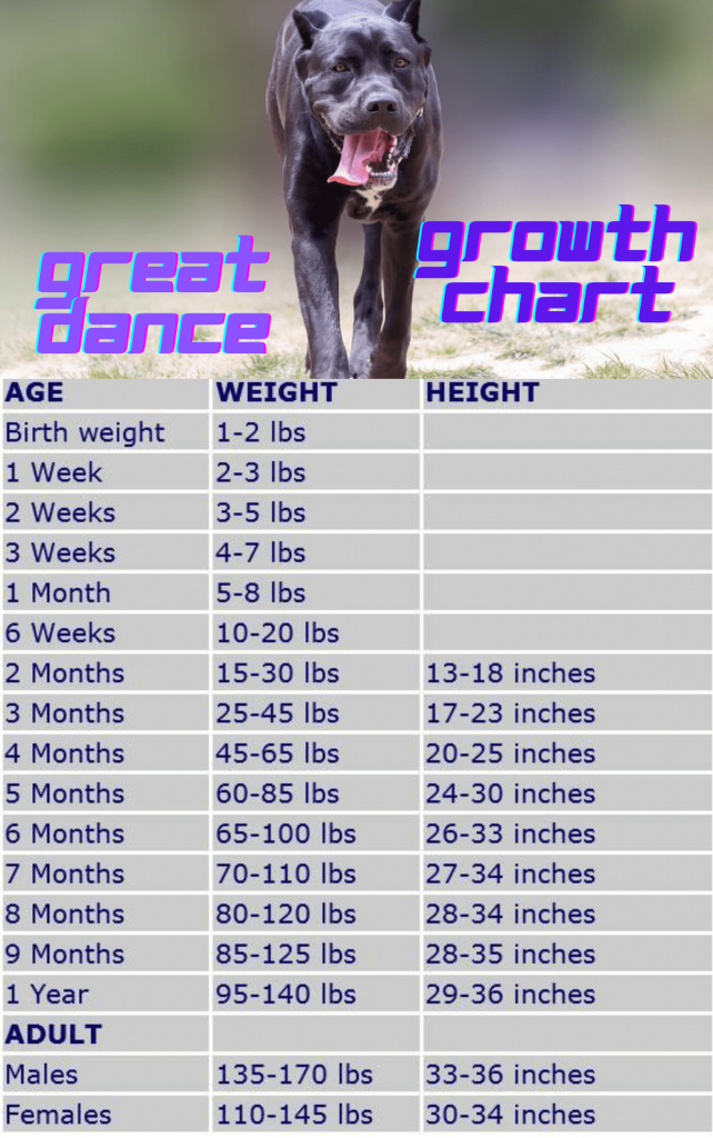 Great Dane Growth chart