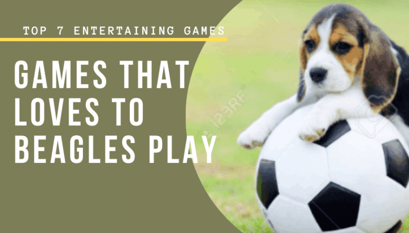 Games That loves To Beagles Play