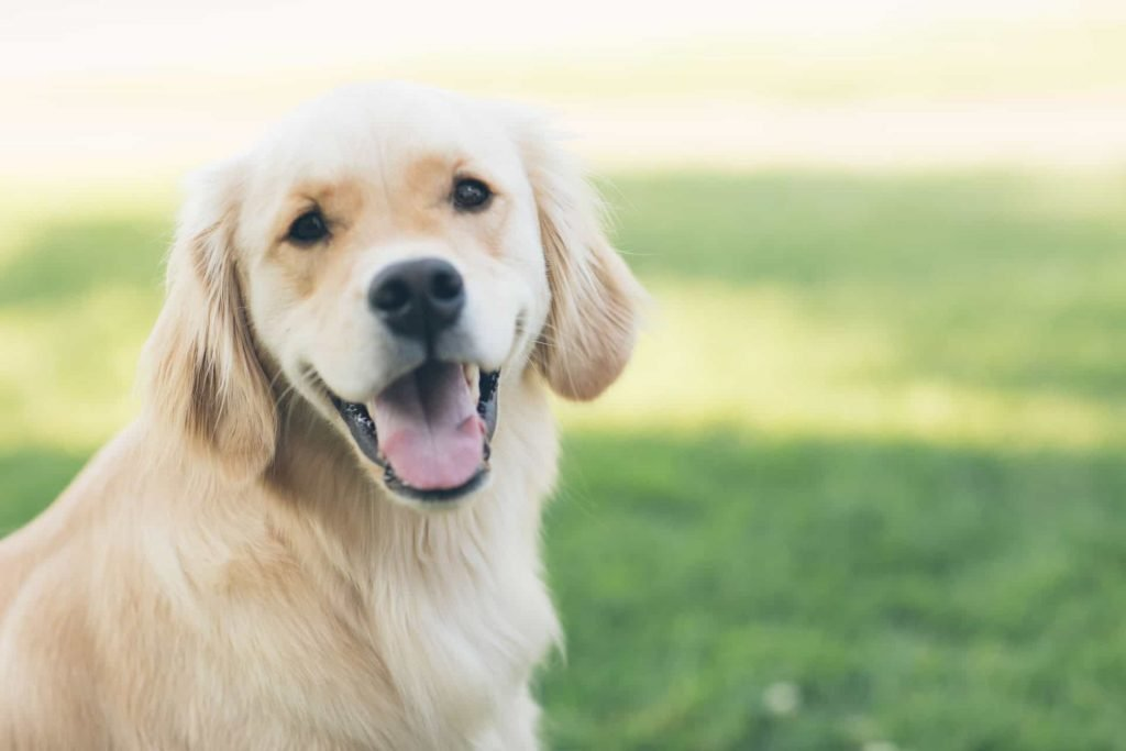 a dog with kidney failure?