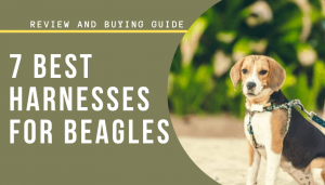 7 Best Harnesses for Beagles