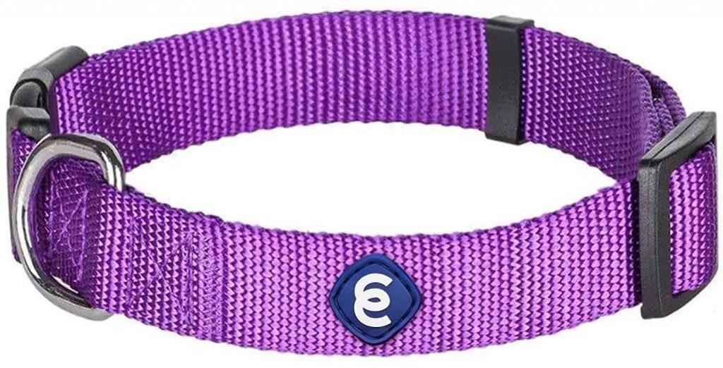 Blueberry Regular Dog Collar