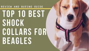 Top 10 Best shock collars for beagles