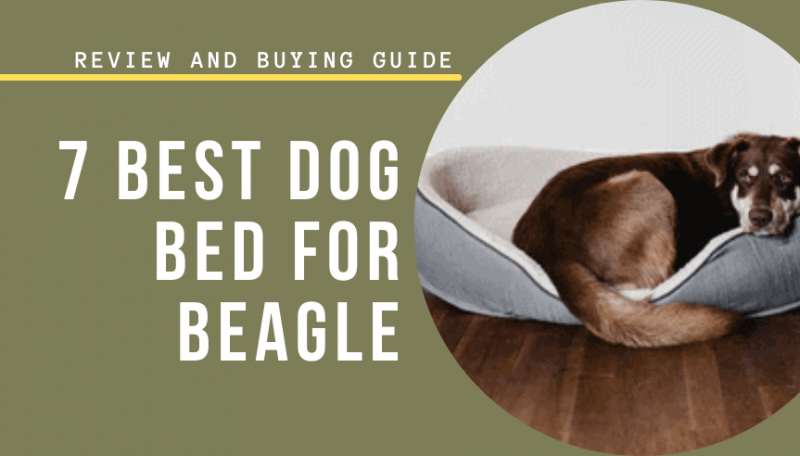 7 Best Dog Bed for Beagle in 2021 | Review & Buying Guide