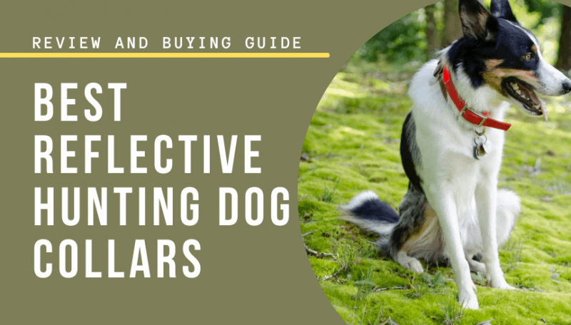 best reflective hunting dog collars for beagle