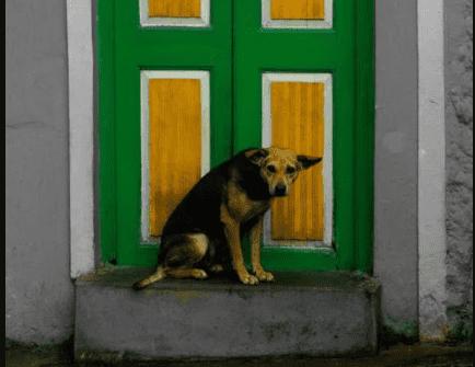 Dogs mark doorways as territory.